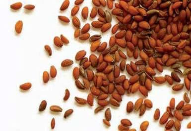 Crees Seeds