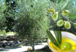 olivec